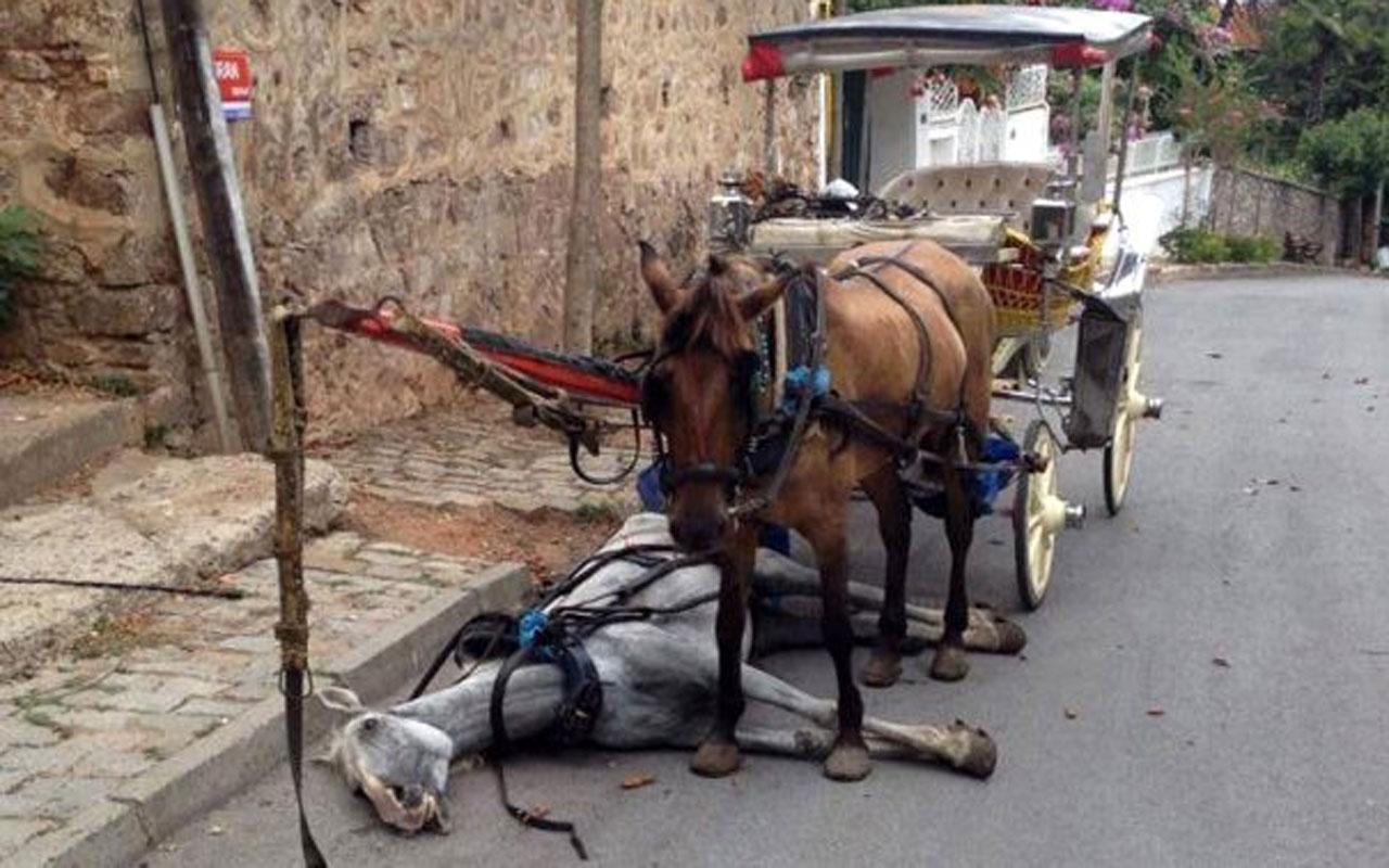'At vebası' Büyükada'yı sardı! Giriş çıkışları durduruldu