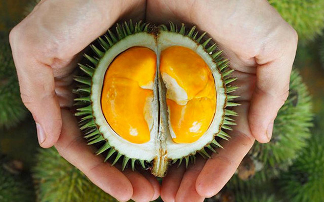 Durian meyvesinin faydaları neler vücutta kan yapıyor!