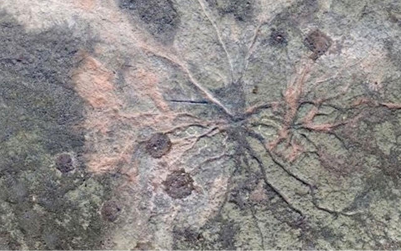 Dünyanın en eski ağacı bulundu