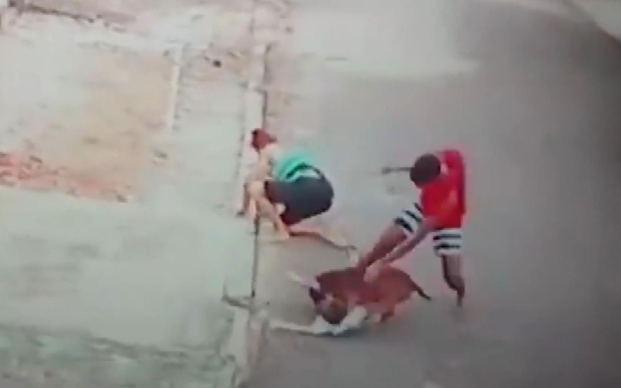 Pitbull saldırısına uğrayan çocuğu böyle kurtardı