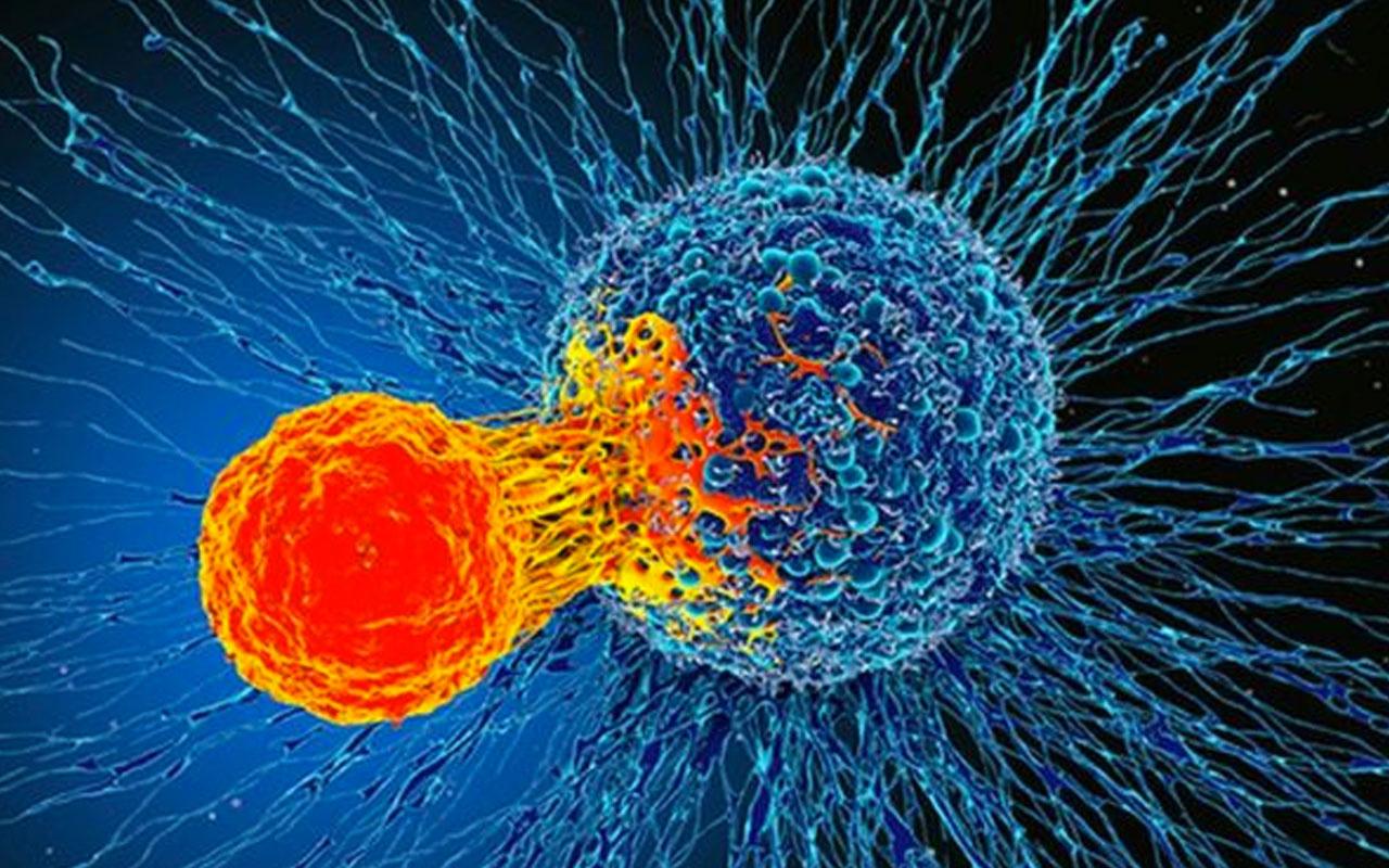 Bilim insanlarından heyecanlandıran keşif! Bağışıklık sistemi tüm kanserleri tedavi edebilir