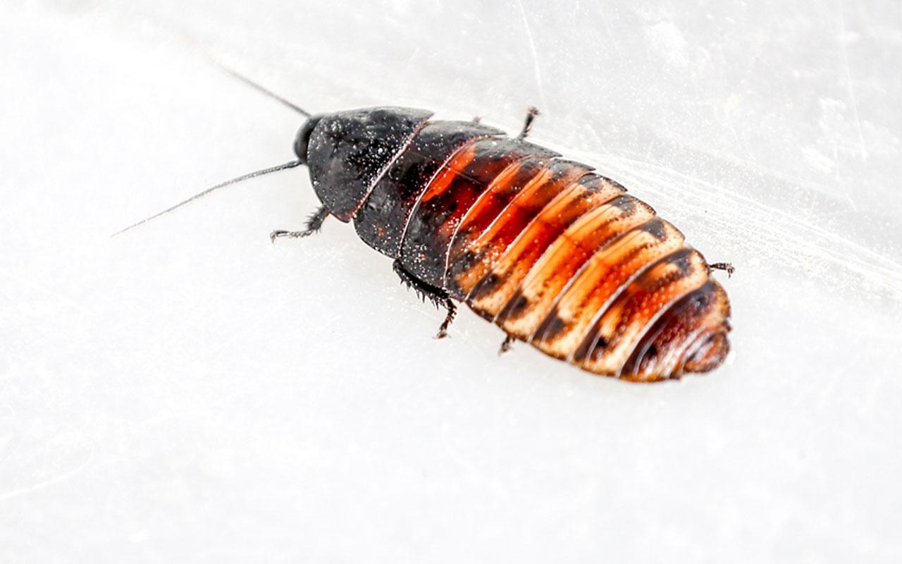 Antalyalı girişimci hamam böceğinden ayda 3 bin lira kazanıyor