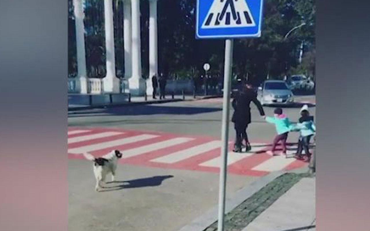 Görenlerin içini ısıtan anlar! Sevimli köpek araçları durdurup bakın ne yaptı
