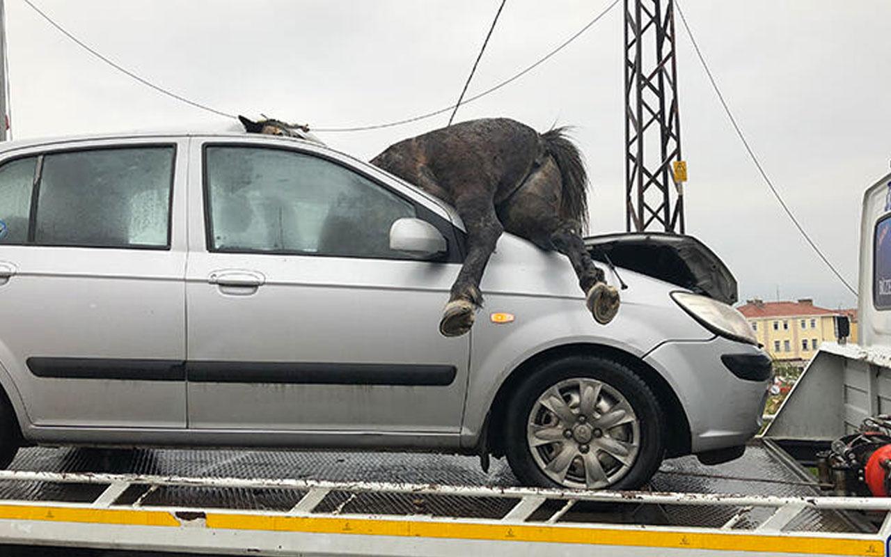 İstanbul'da yürek sızlatan kaza! 3 at telef oldu atın biri ön camdan böyle girdi