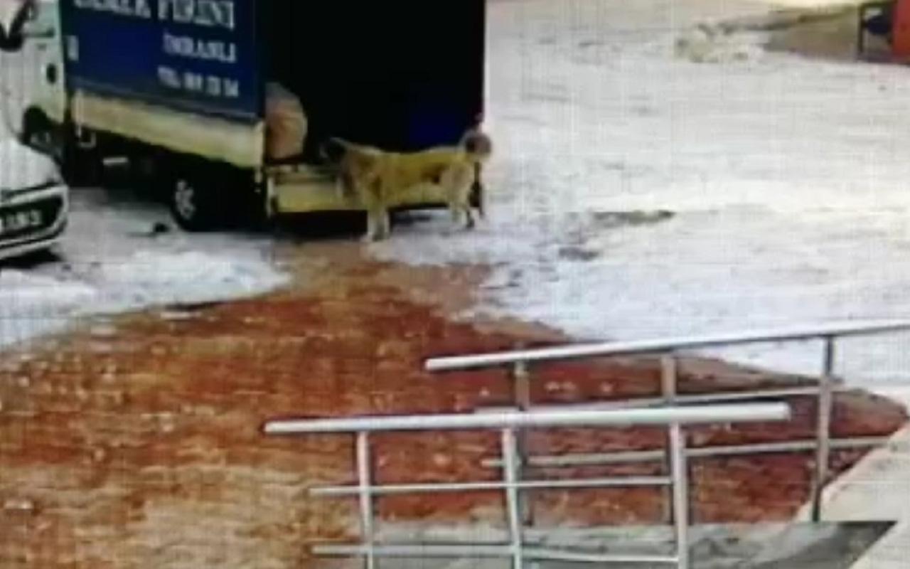 Sivas'ta kamyonetten ekmek alan sevimli köpek kamerada