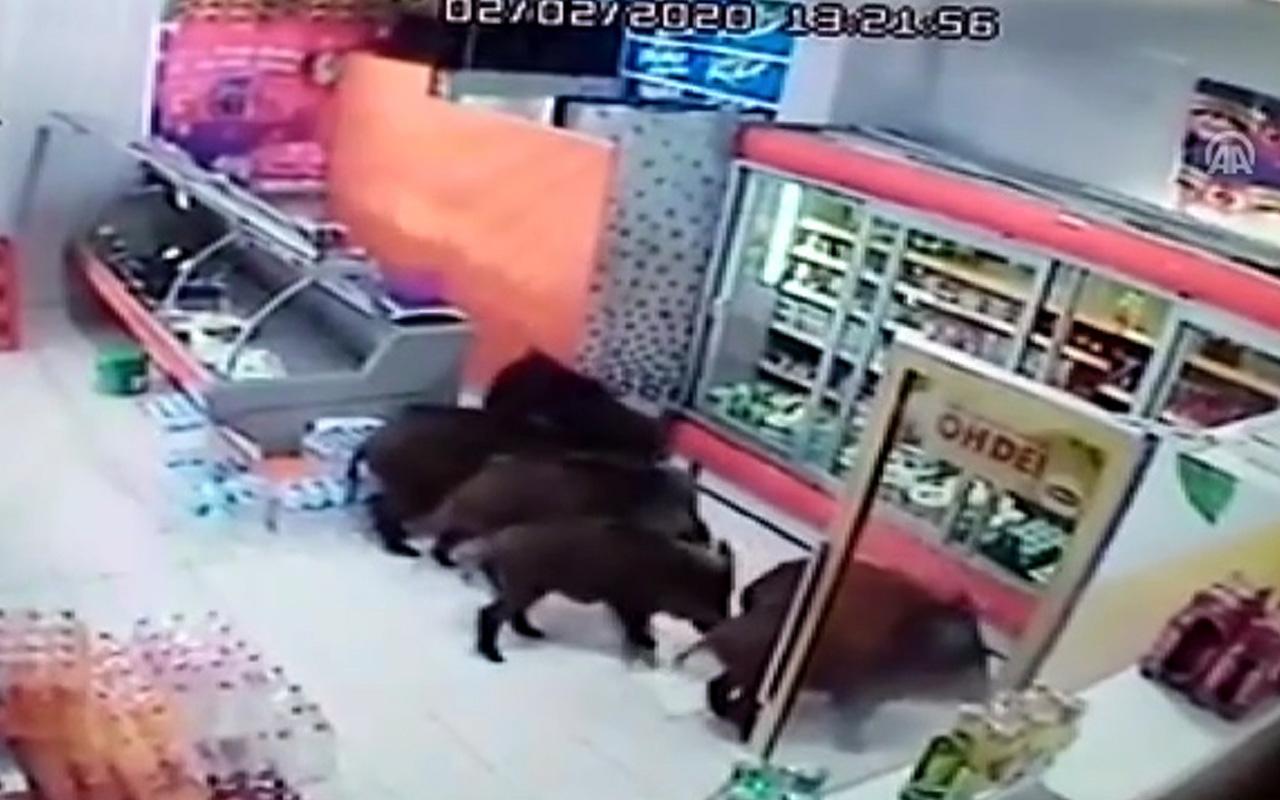 Bursa'da domuzlar iş yerleri ve evlere girdiler!