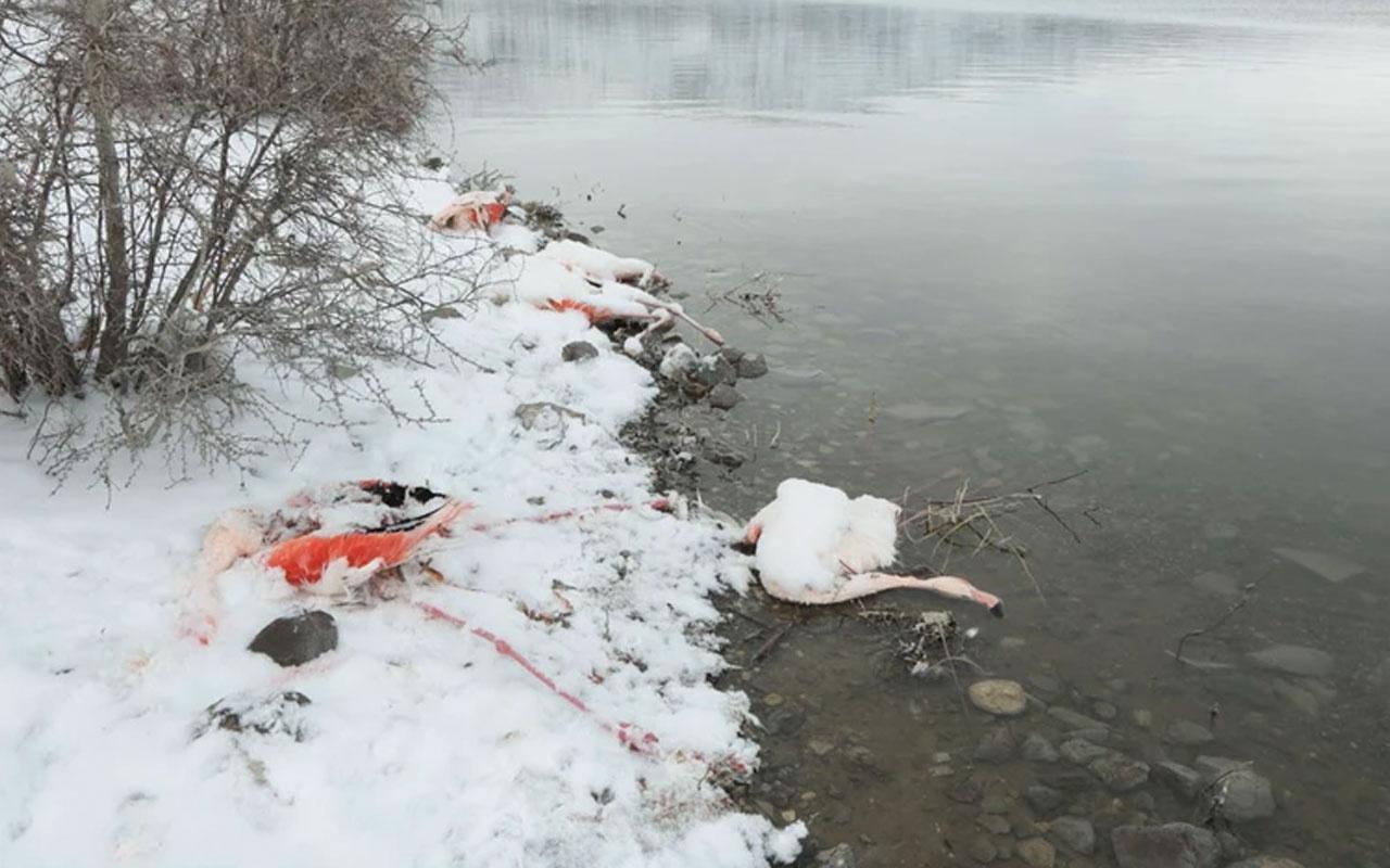 İvriz Baraj Gölü'nde kahreden görüntü! 12 flamingo soğuklara dayanamadı