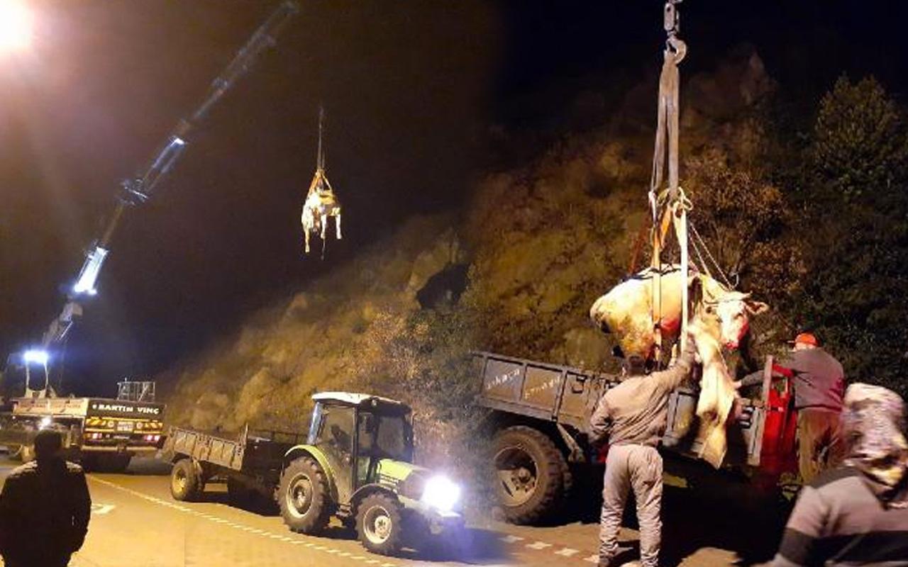 Otlamak için çıkıp yamaçtan yuvarlanan ineği vinç kurtardı