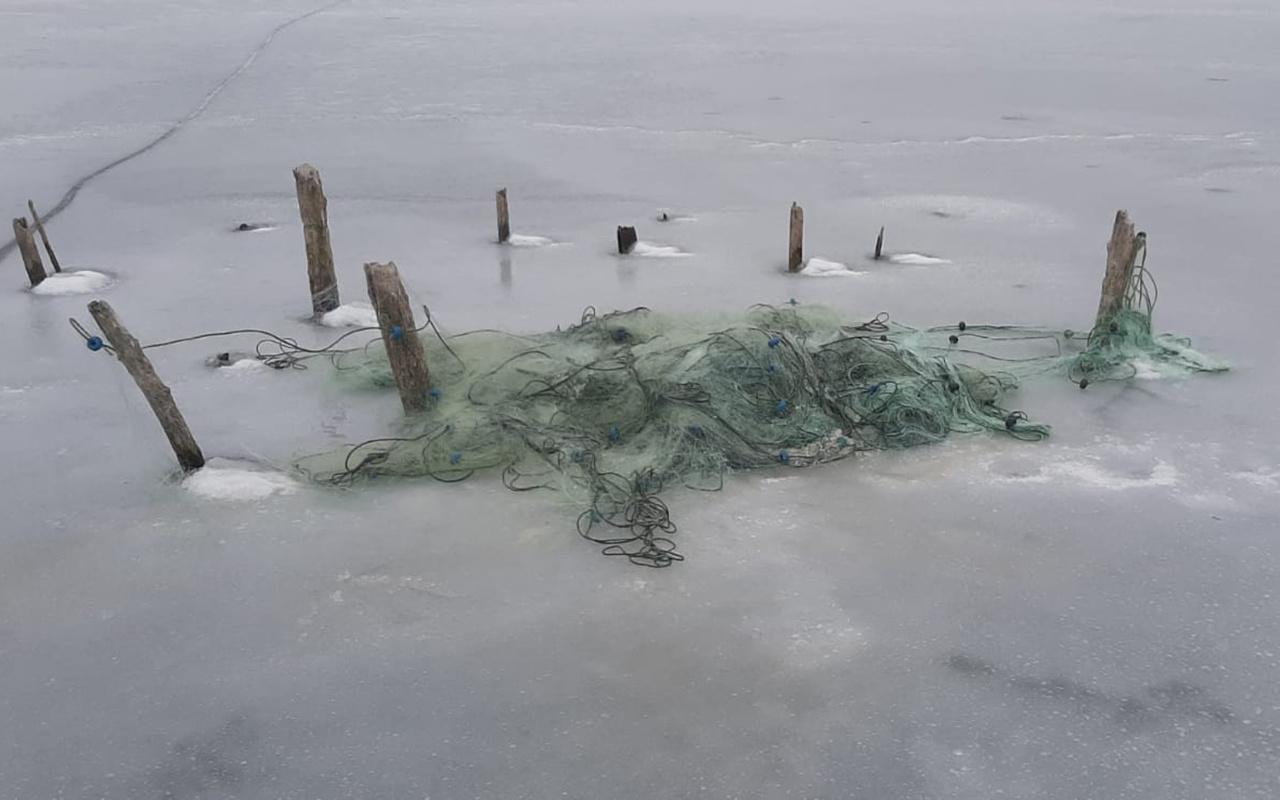 Baraj donunca ortaya çıktı! Kastamonu'da balıkçı ağlarına takıldı