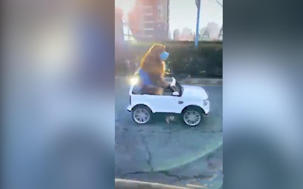 Markete gidip alışveriş yapan köpeğin videosu sosyal medyada viral oldu!
