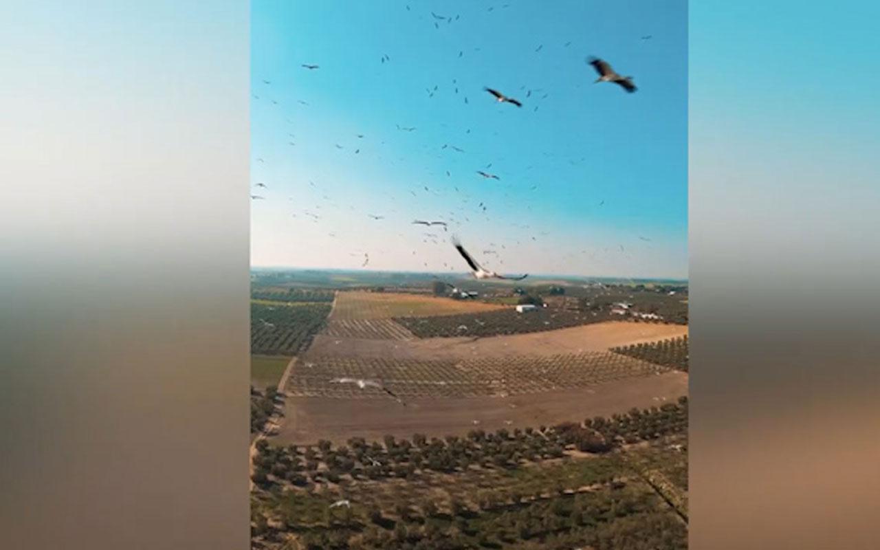 Muhteşem görüntüler! Yüzlerce leyleğin arasından drone'la geçti