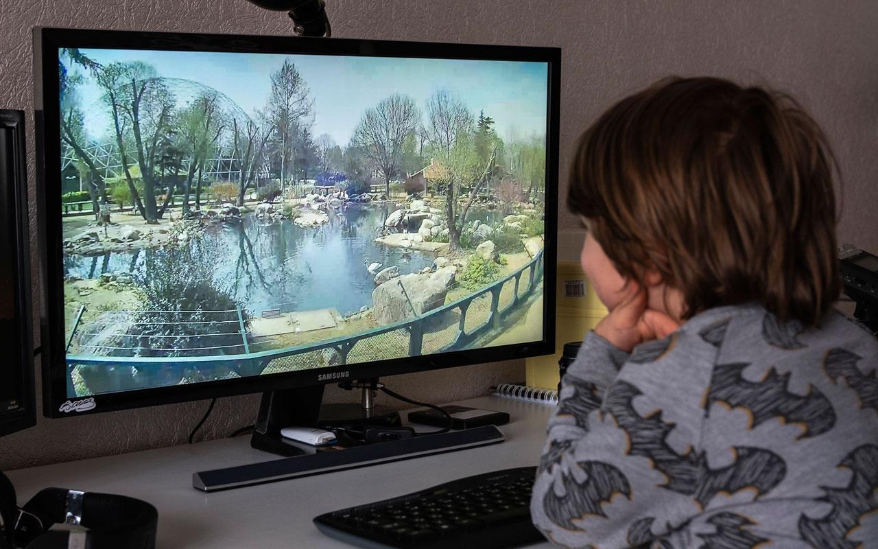 Bursa Hayvanat Bahçesi artık evlerde kameralarla canlı yayın