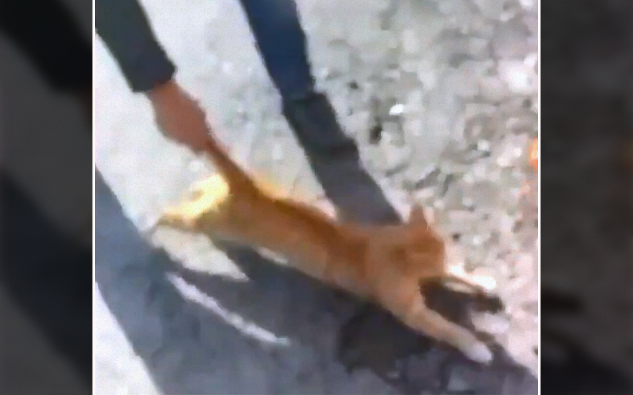Kahramanmaraş'ta kediye eziyete 947 lira ceza