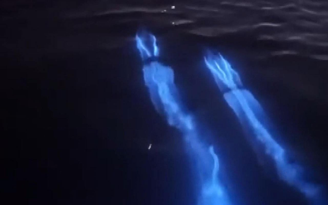 ABD'de yunusların muhteşem ışık saçan gösterisi kamerada