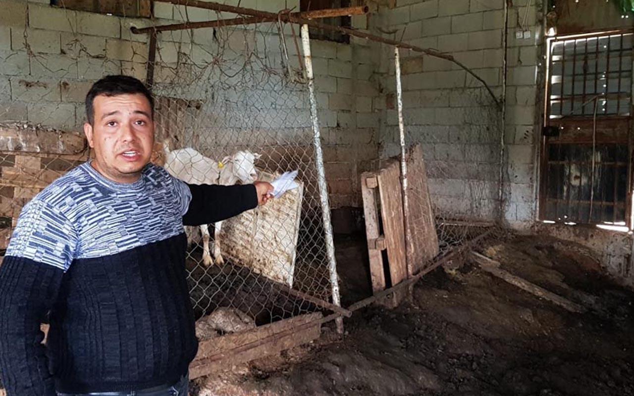 Hatay'da köpekler ahıra girip tam 32 koyunu telef etti