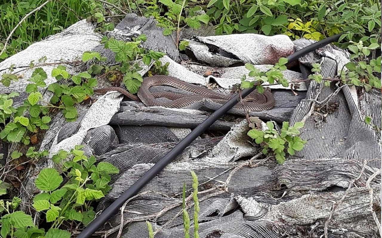 Sakarya'da yılanı tatlı dille çıkartmaya çalıştı! İzleyenler şaşkına döndü
