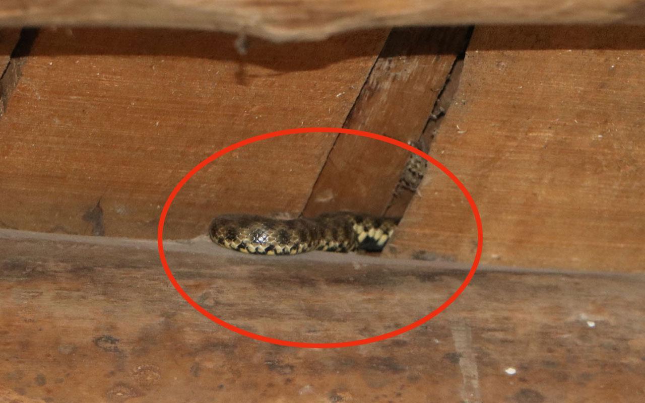 Evi onlarca yılan bastı! Aile korkusundan evi terketti mahalle sokağa döküldü