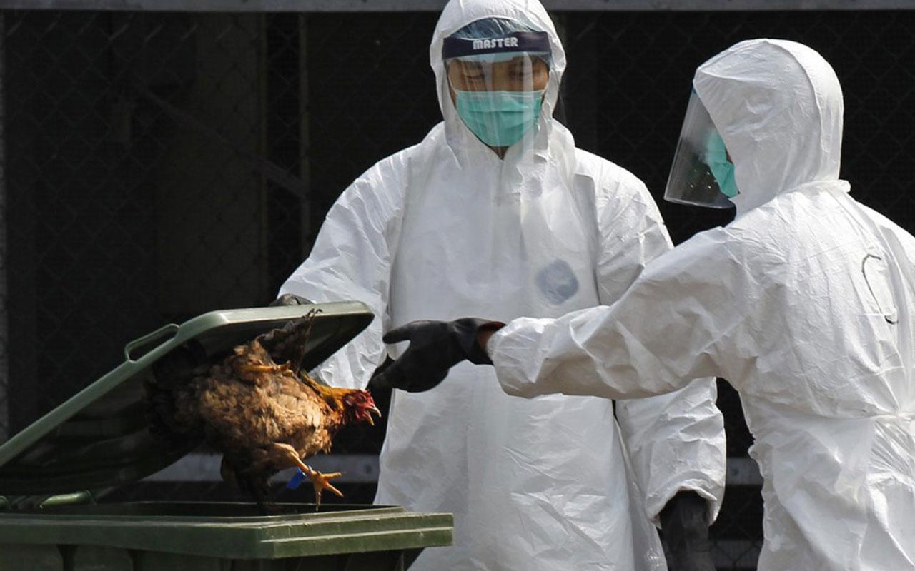 Koronavirüs bitmeden kuş gribi salgını patladı! Düzce Valiliği muhtarları uyardı