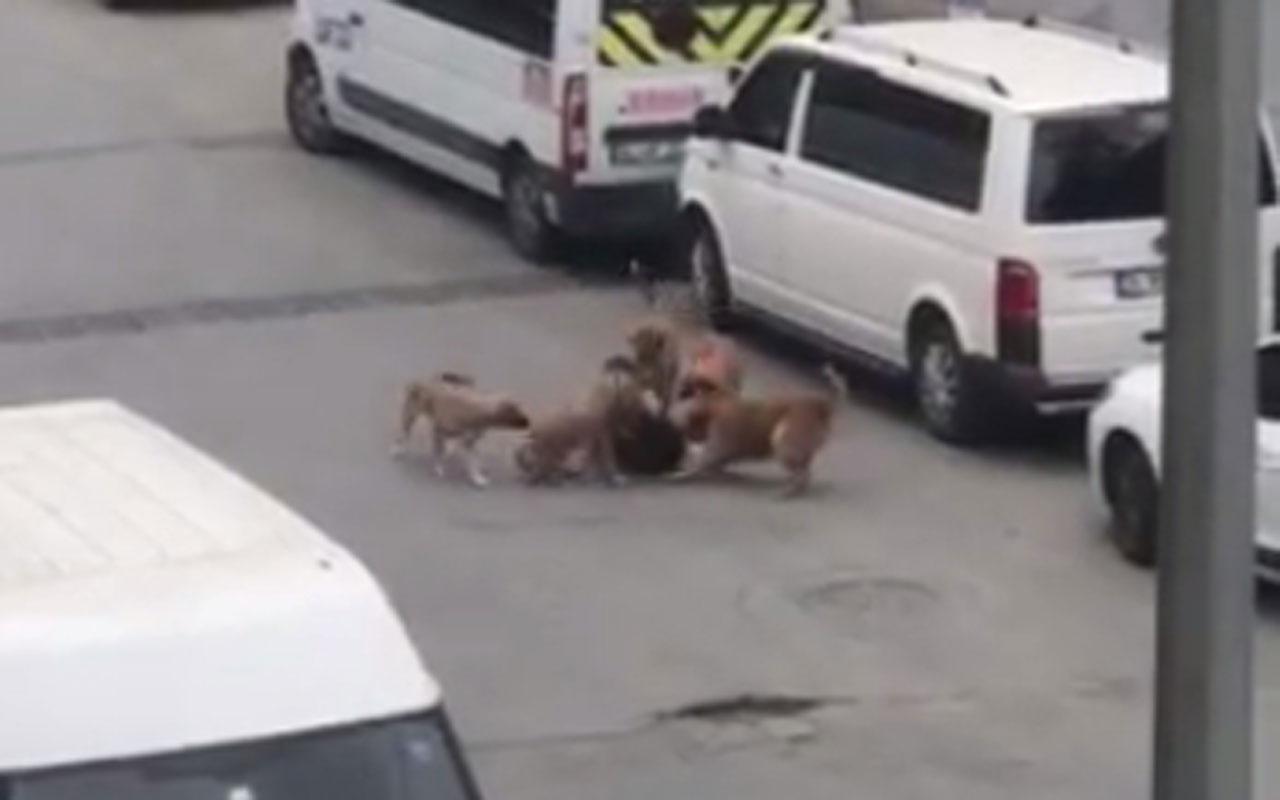 İstanbul'da sokak köpekleri işe giden kadına saldırdı