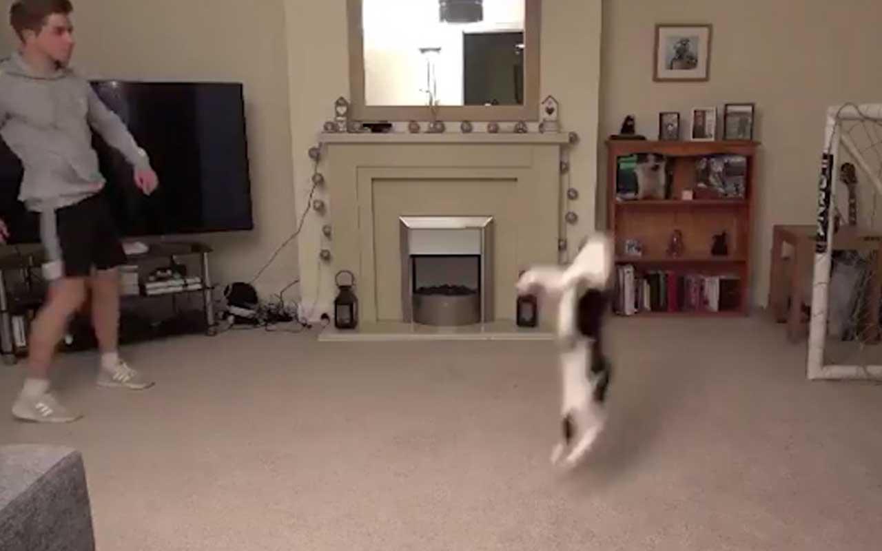 Sosyal medya bu kediyi konuşuyor! Yaptığı hareketler olay oldu