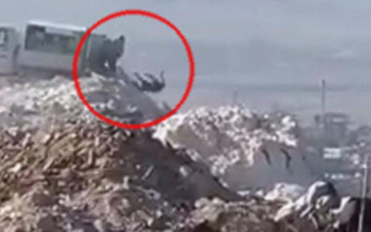 Denizli'de ölü köpeklerin çöpe atıldığı görüntüler tepki topladı