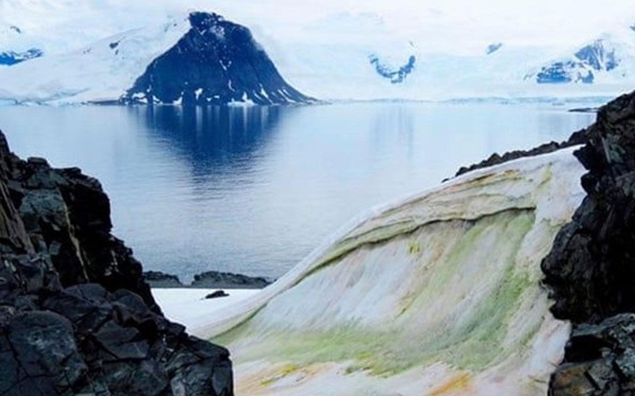 Antartika'daki eriyen yüzey yosun örtüleriyle kaplanıyor