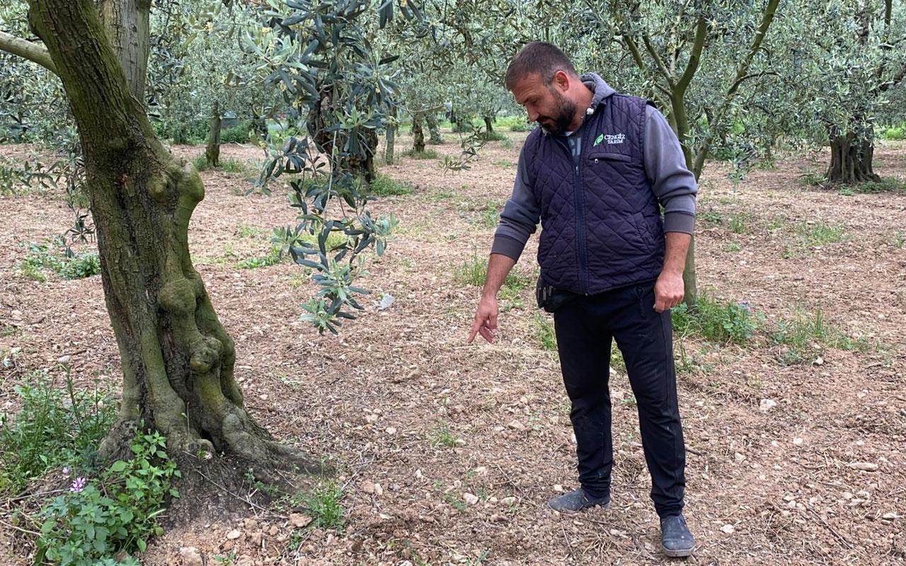 Bursa'da çiftçi tarlasında buldu apar topar yetkililere götürdü