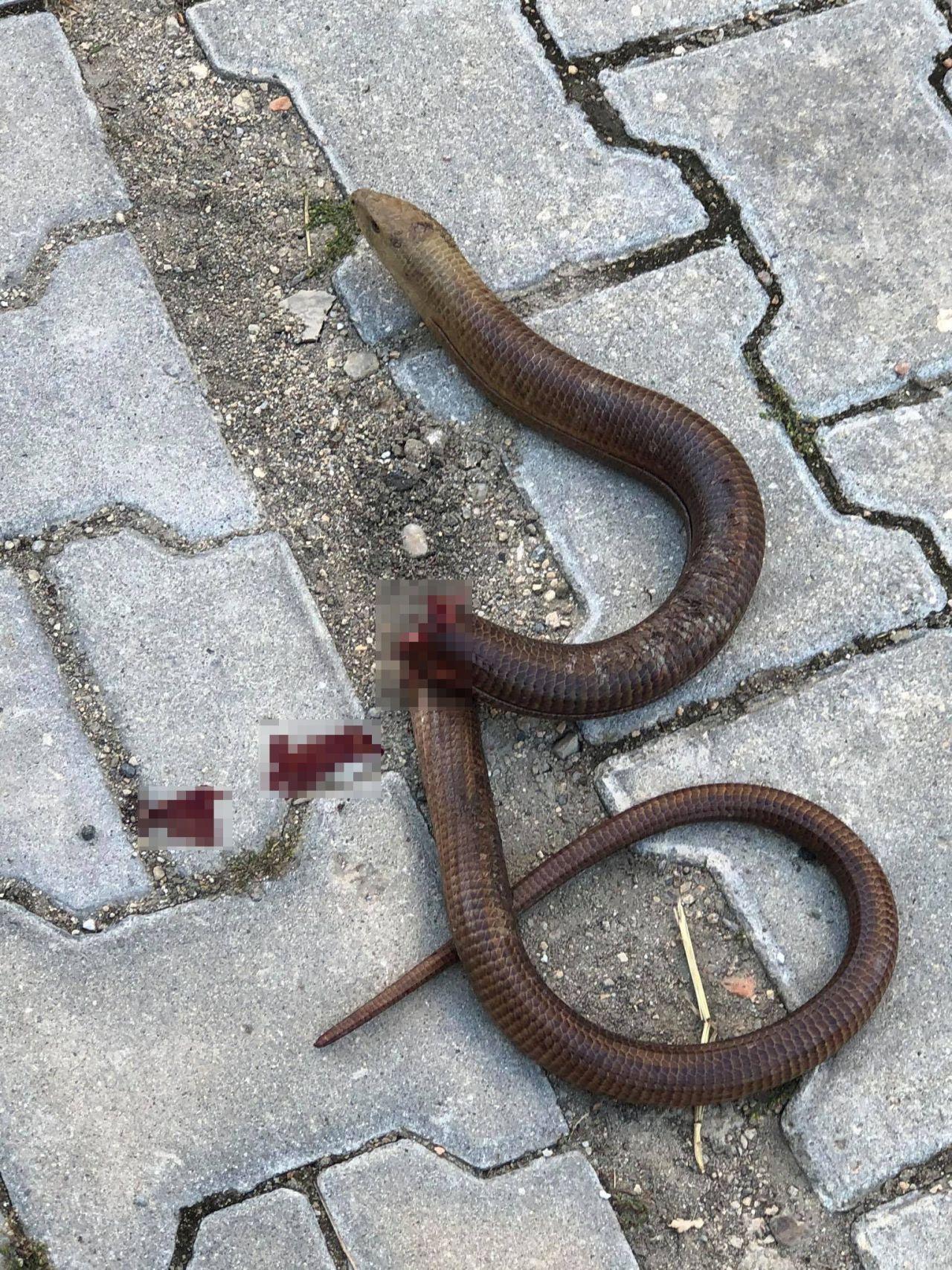 Tekirdağ'da otomobilin jantından çıktı herkes yılan sandı bakın ne çıktı!