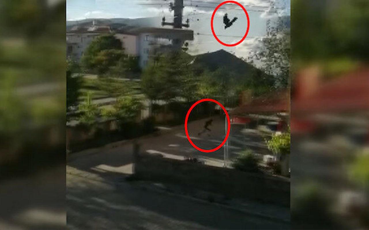 Erzincan'da kargalar vatandaşlara zor anlar yaşattılar