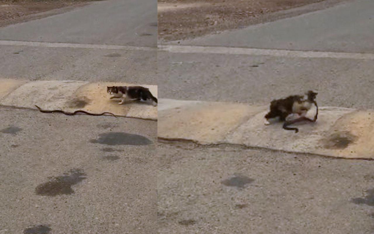 Kedi yolda bulduğu yılanı böyle kaptı