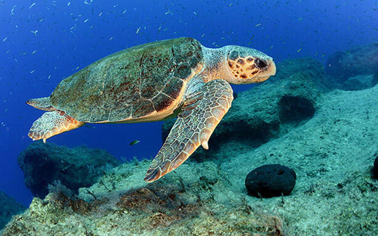 Dünyanın en büyük yeşil kaplumbağa yuvaları ilk kez drone ile görüntülendi