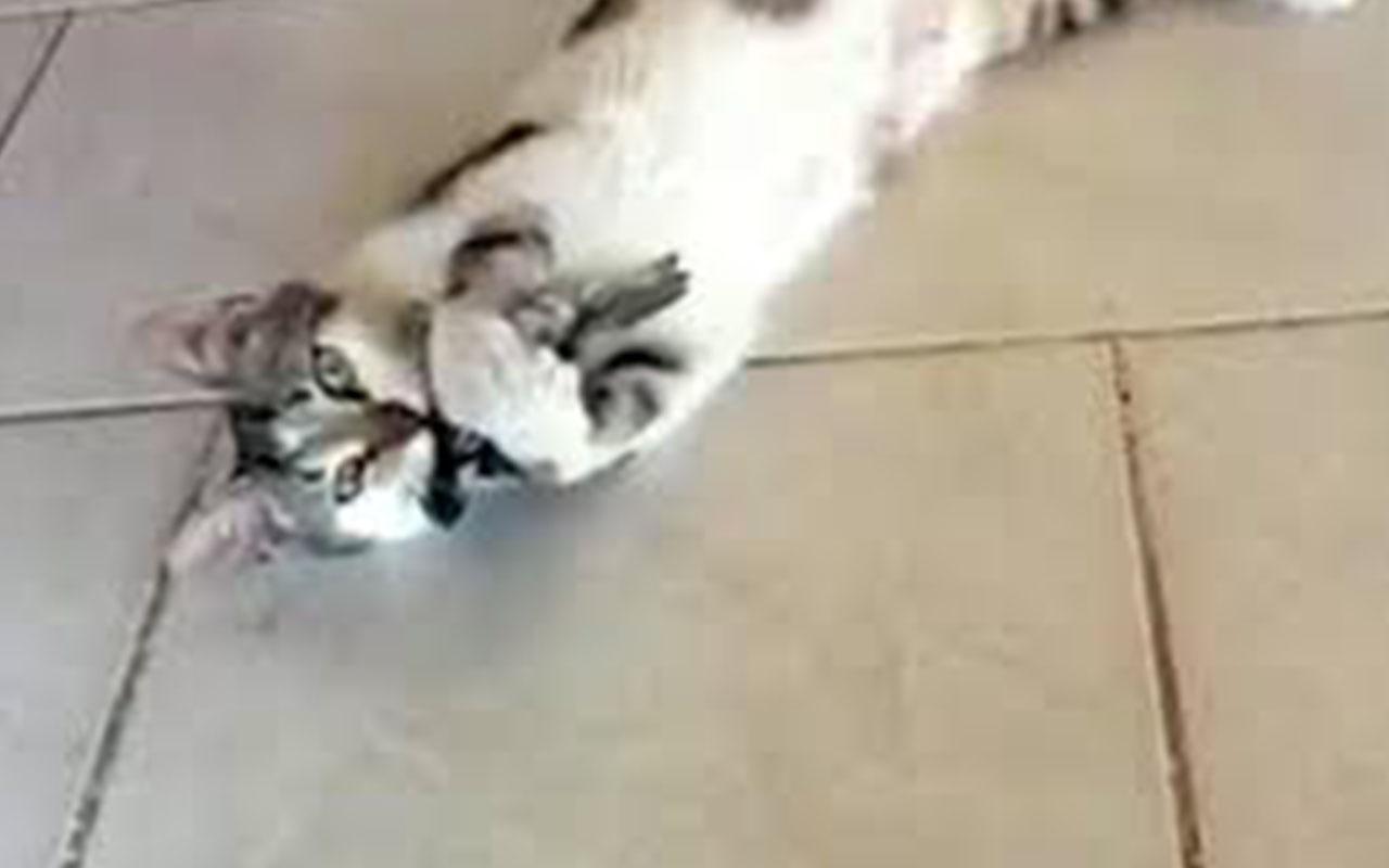 Kedinin yemeğe çalıştığı kuş böyle kurtuldu