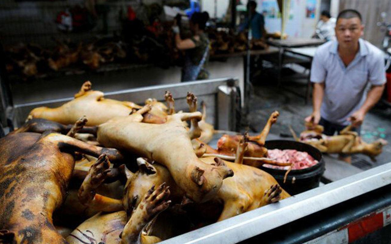 Çin'de köpek eti festivalinden ilk görüntülere tepkiler çığ gibi