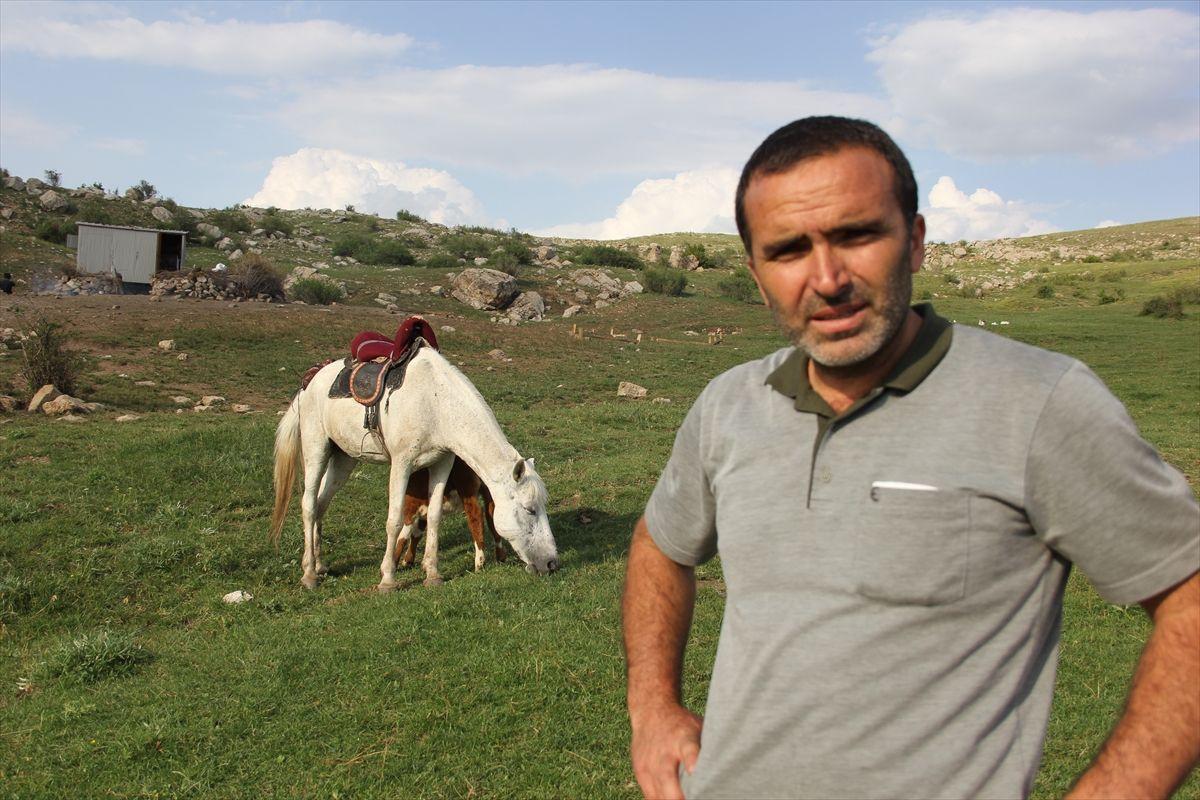 Sivas'ta annesi olmayan danayı at emziriyor merhametin böylesi