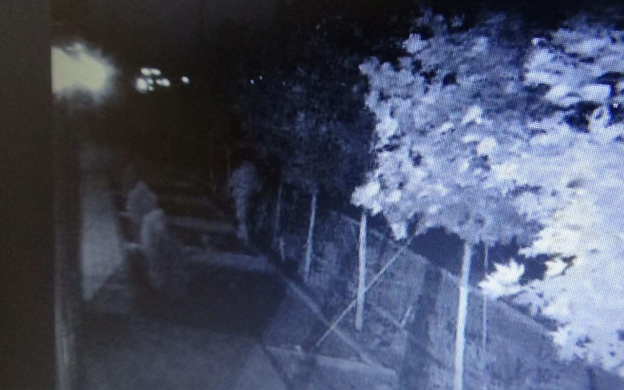 Diyarbakır'da bir garip hırsızlık ağaçları çalındı