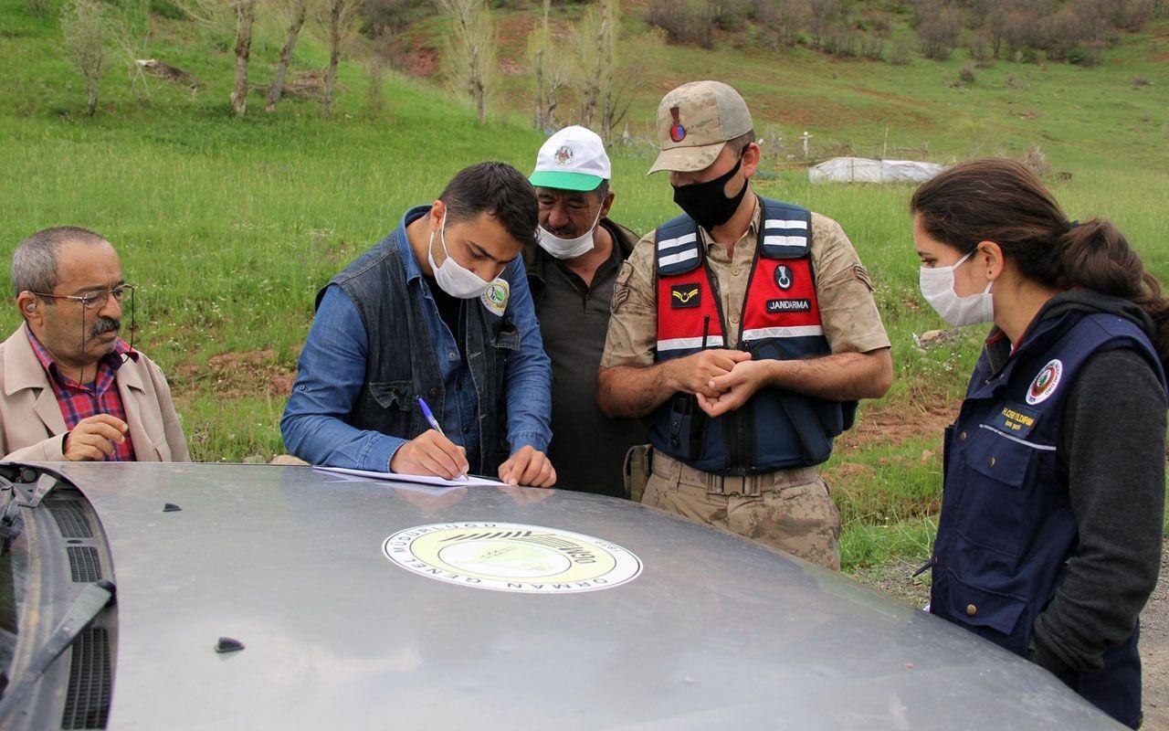 Sivas'ta istilacı tırtıllara karşı 'Sahra' adlı ışıklı tuzak kuruldu