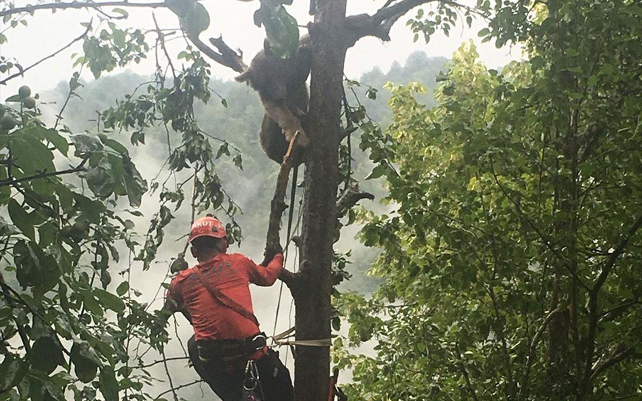 Rize ağacın tepesinde görüldü köylüler ekipleri aradı