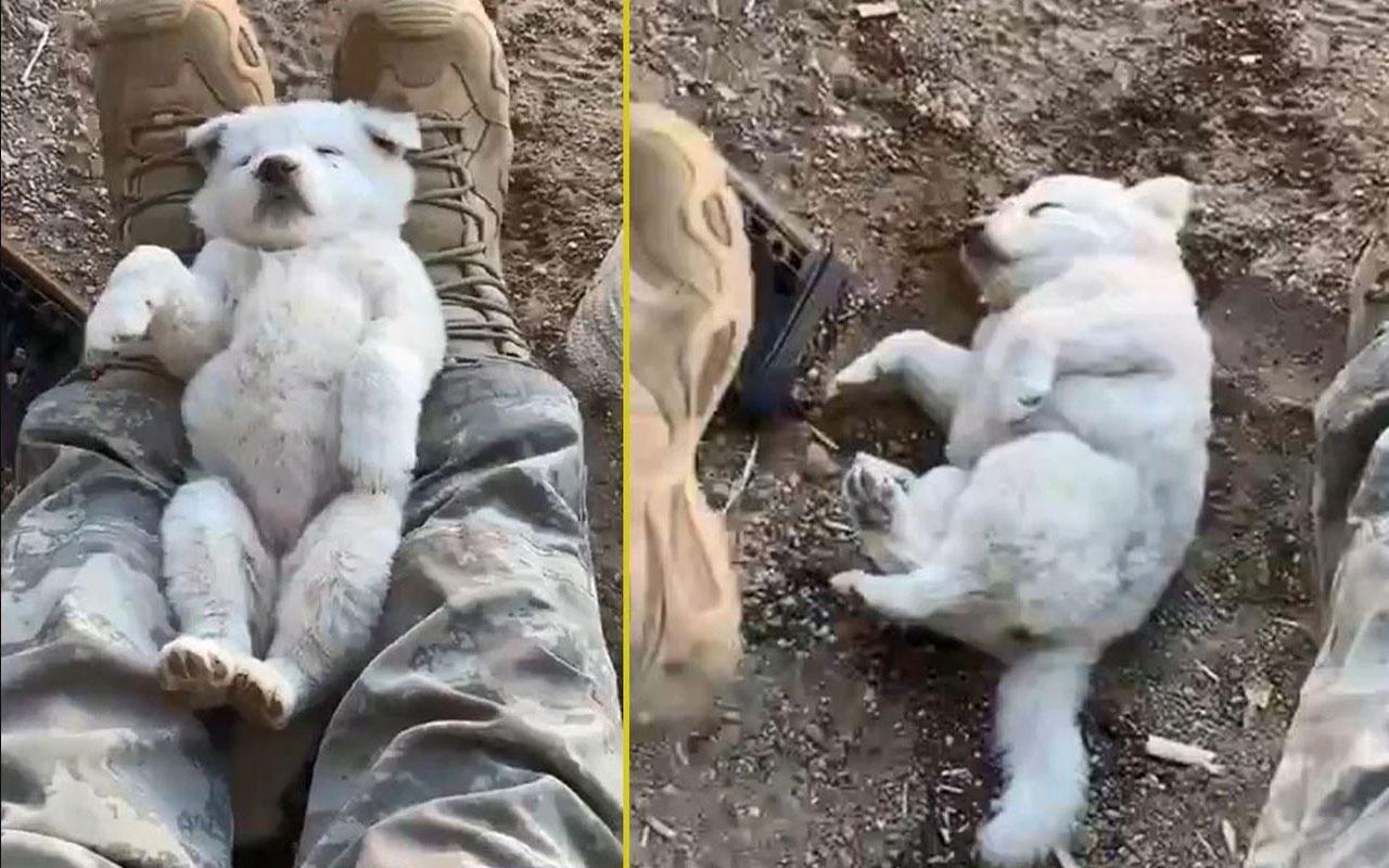 Mehmetçik yine gönülleri fethetti! Yavru köpeği ayağında sallayarak uyuttu
