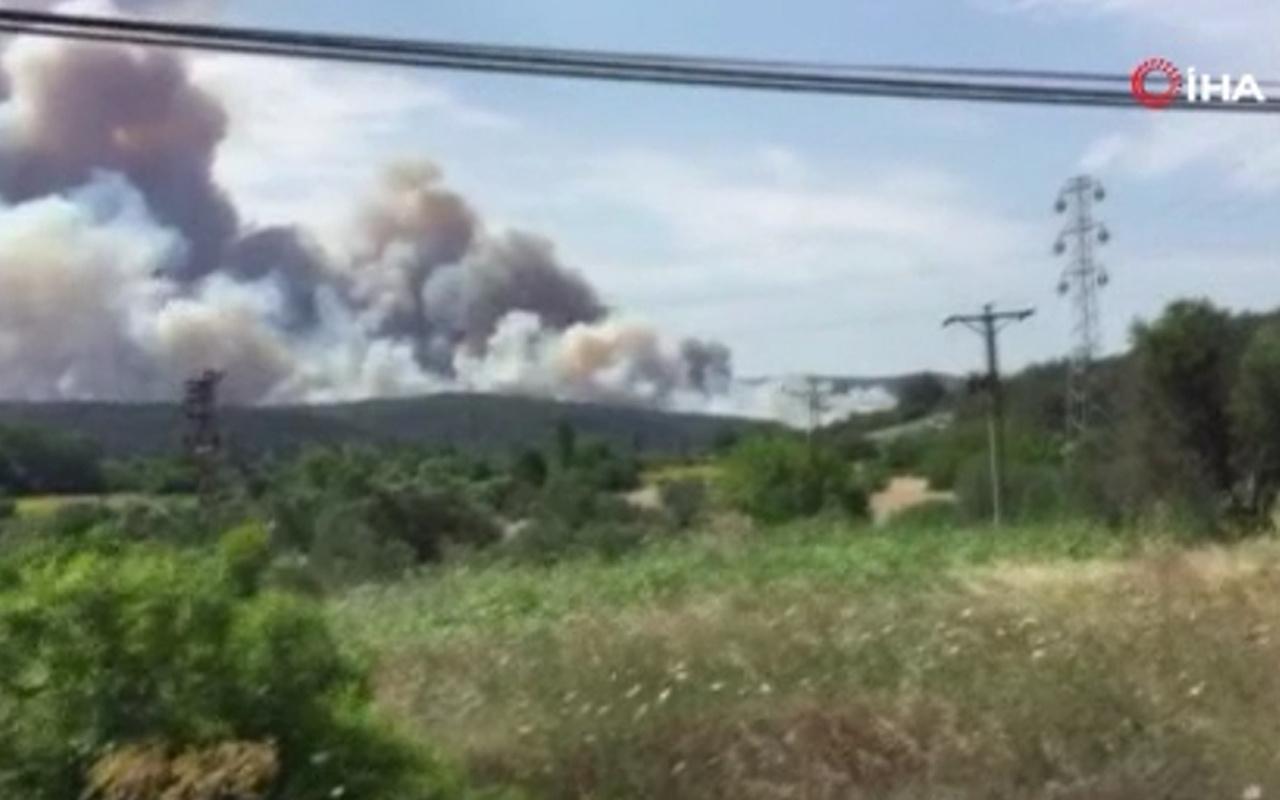 Çanakkale Gelibolu yarımadasında orman yangını!