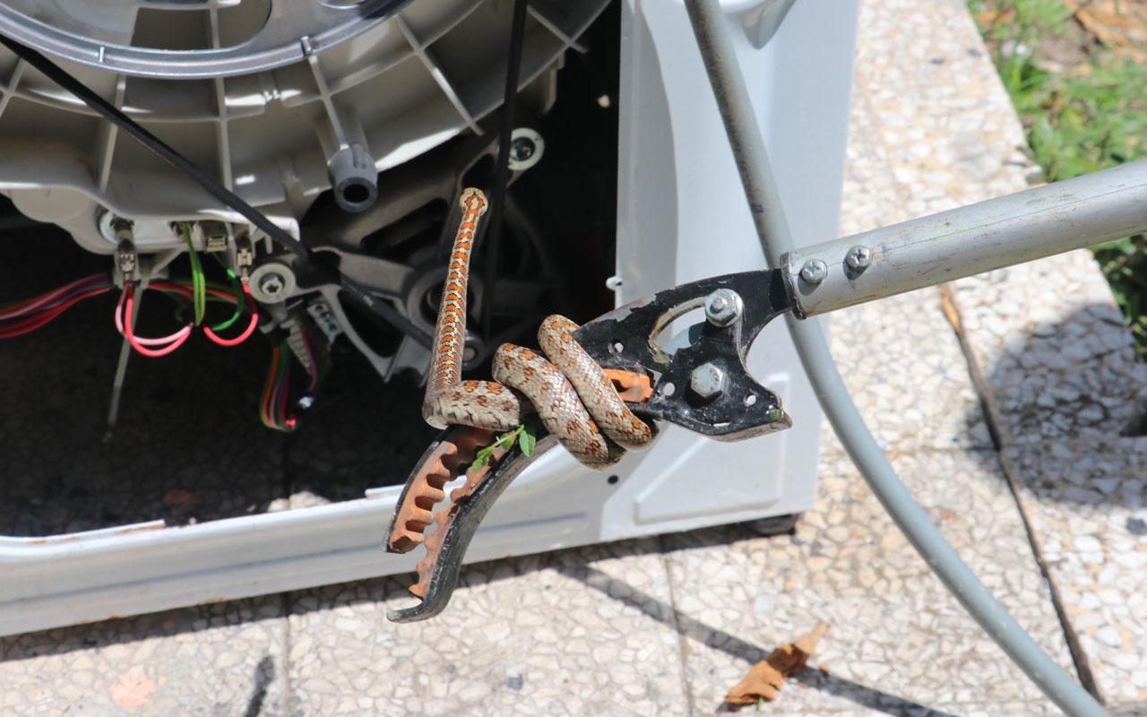 Kocaeli'de içine giren yılanı çıkarmak için çamaşır makinesini parçaladılar