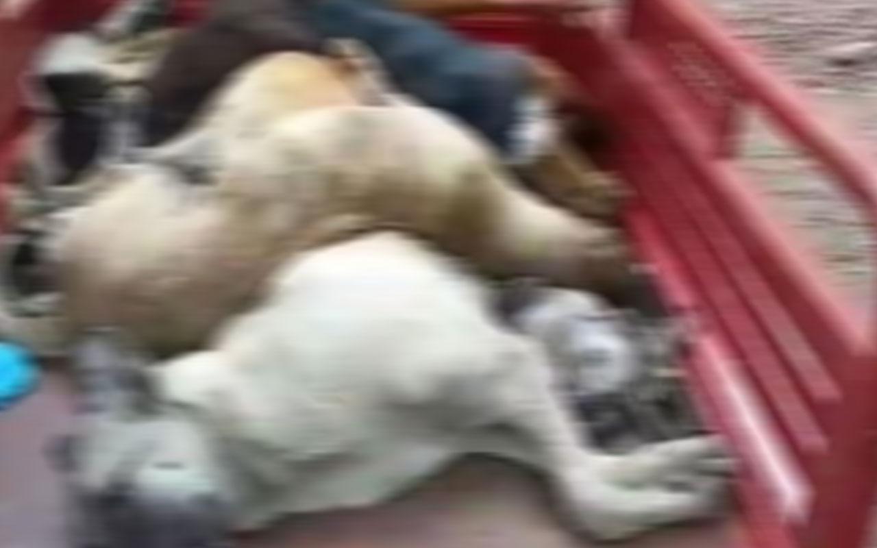 Sokak hayvanlarının diri diri gömüldükleri iddiasına idari soruşturma