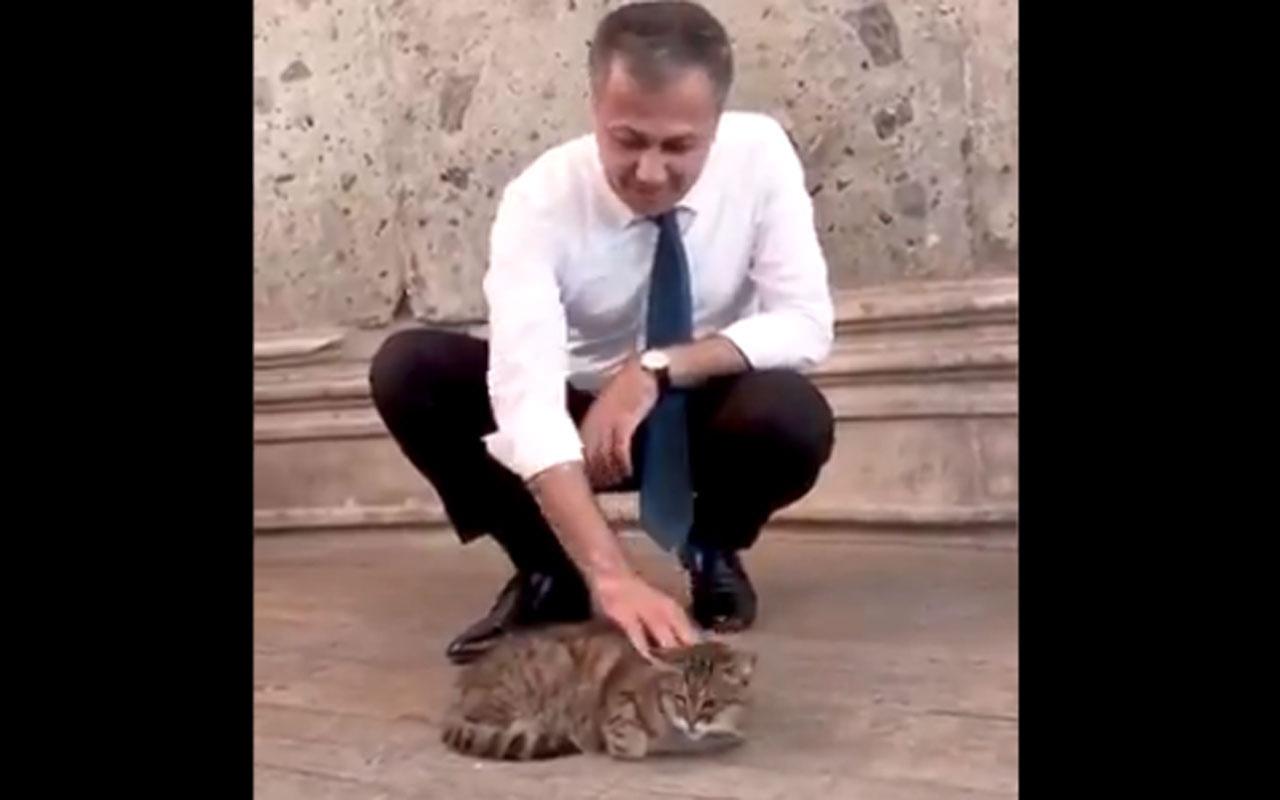 İstanbul Valisi Ali Yerlikaya Ayasofya'nın meşhur kedisiyle ilgilendi