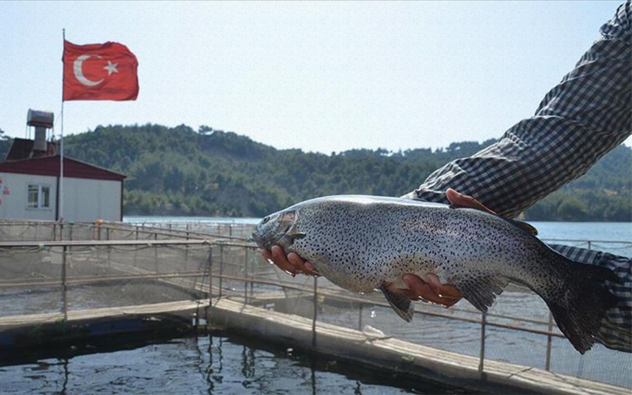 Denizi olmayan Kahramanmaraş'tan 25 milyon dolarlık balık ihracatı