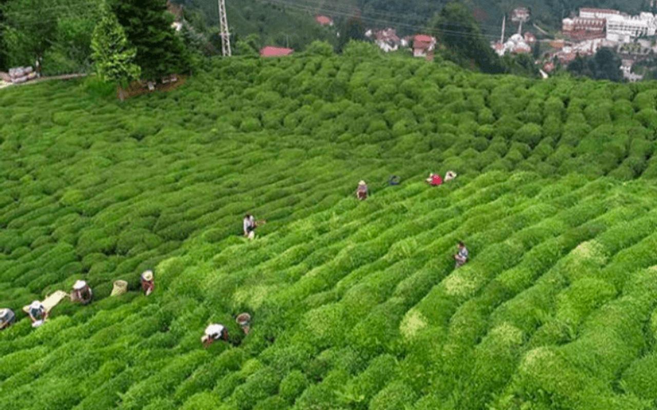 Çaykur yaş çay ödemelerine başladı
