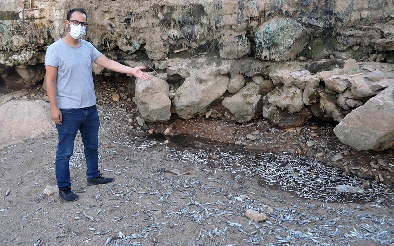 Manisa'da balık mezarından adım atacak yer kalmadı iki durum sebep oldu