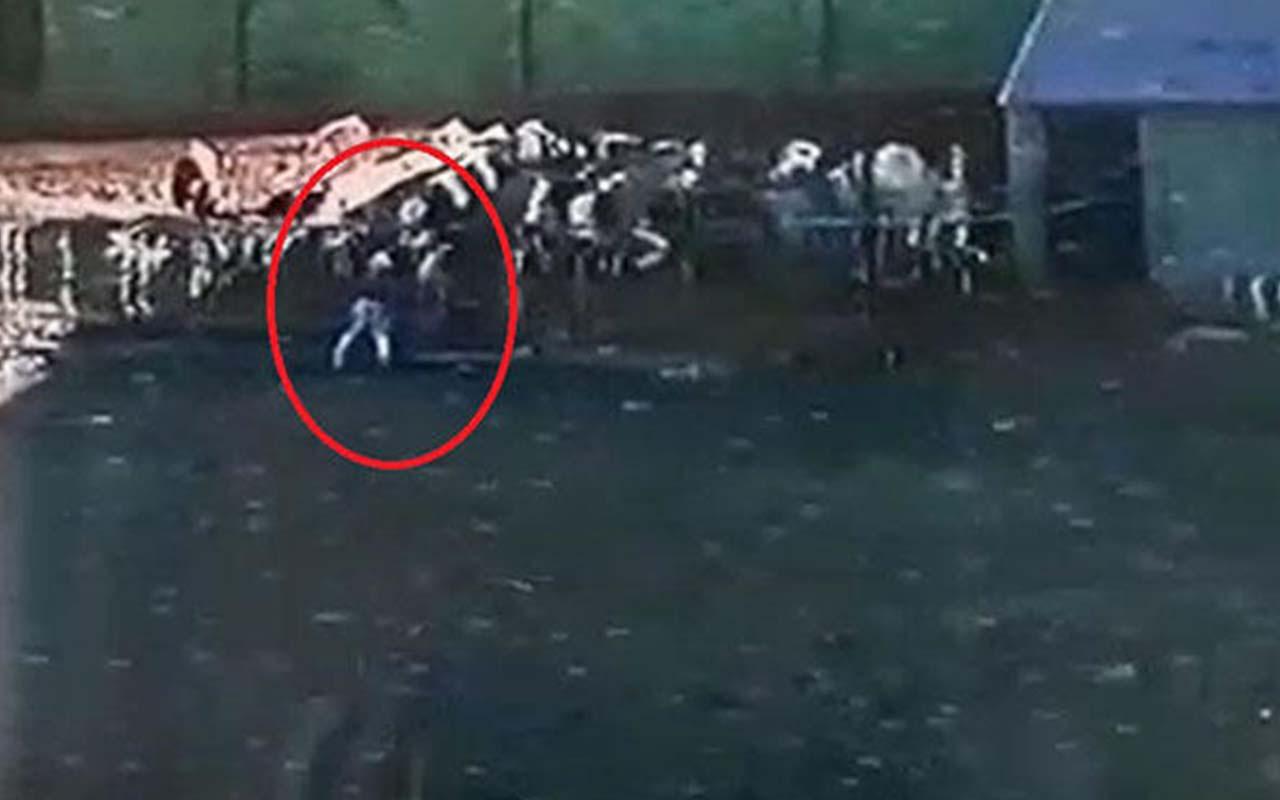 850 kiloluk boğa sahibini öldürdü! Korkunç anlar kameralara yansıdı