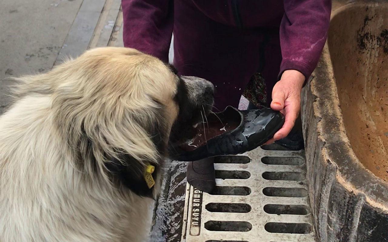 Sivas'ta yaşlı kadın lastik ayakkabısını çıkarıp içine su doldurarak köpeğe su içirdi