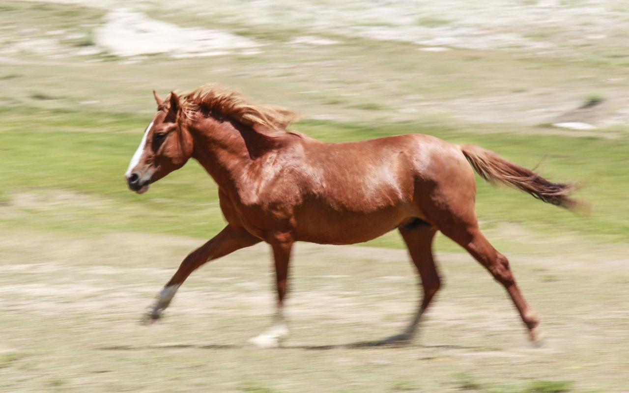 Tunceli'de göçerlerin doğaya saldığı atlar yaylalara renk katıyor