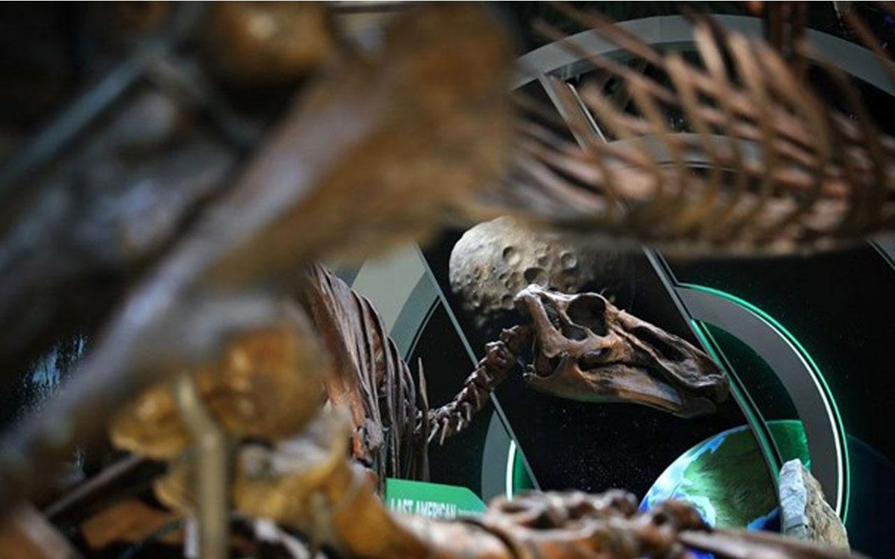 T-Rex'in benzeri yeni bir dinozor türü keşfedildi