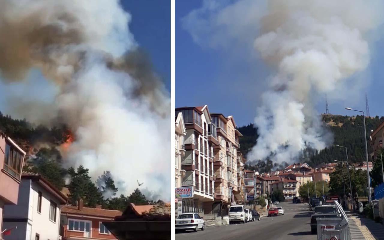 Ankara'da ormanlık alan alevlere teslim oldu